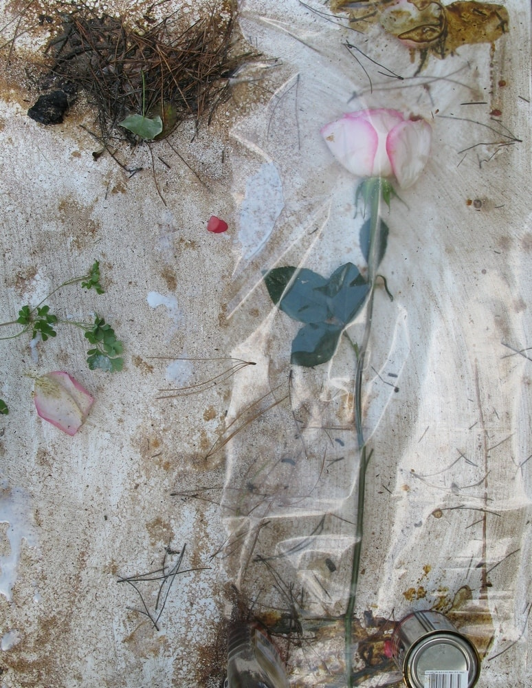 Photograph Of Collage on Canvas White Pink Rose, 2008