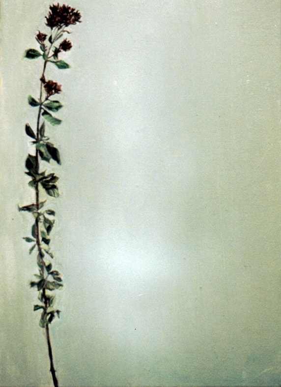 1998, Green flower